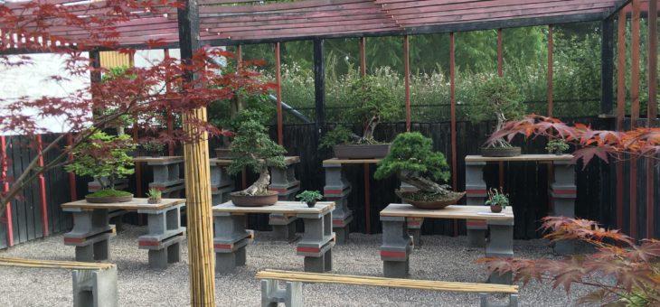 Etablering af det nye Bonsaimuseum